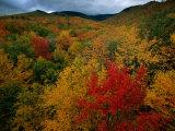 An Autumn View
