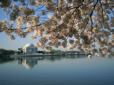 View of Cherry Blossoms and Lincoln Memorial at the Tidal Basin