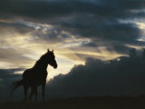 A Wild Horse is Silhouetted by the Setting Sun under Gathering Storm Clouds