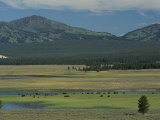 Scenic Wyoming Landscape with Grazing Bison