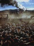Cattle Drive at Trinchera Ranch