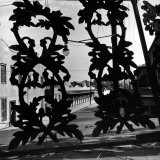 View Through Acorn Iron Grillwork of Rows of Cheap Sporting Houses