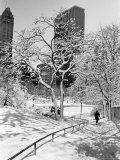 Central Park After a Snowstorm Aluminium par Alfred Eisenstaedt