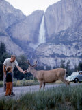 Father and Son Feeding a Wild Deer in Yosemite National Park with Yosemite Falls in the Background