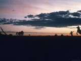 Dawn in the Australian Outback Finds a Stockman Trying to Calm His Rearing Horse