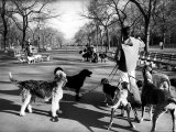 Dog Walkers in Central Park