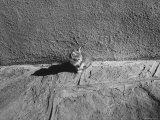 Kitten Sitting on Sunny Pavement