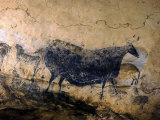 Lascaux Cave Drawing Depicting Steer  Circa 15 000 BC