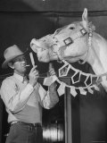 """Groom Cleaning Horse's Teeth During Filming of the Movie """"The Ziegfeld Follies"""""""
