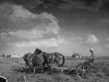 Farmer Driving Horses in the Field