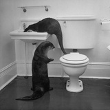 Otters Playing in Bathroom Papier Photo par Wallace Kirkland