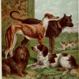 Illustration by Kronheim of Various Dogs  from Aunt Louisa's Birthday Gift