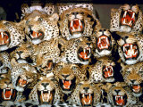 Stuffed Tiger Trophy Heads of Big Game Hunters Are Piled Up in Paul Zimmerman's Taxidermy Shop