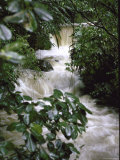 Water Rushing over Stones in Lush Jungle