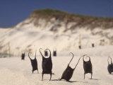 Sea Weed Pods on the Beach at Martha's Vineyard Papier Photo par Alfred Eisenstaedt