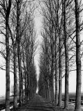 Tree Lined Road Near Delft  Holland