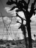 Power Line That Carries Current from Hoover Dam to Los Angeles  in Mojave Desert