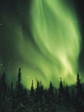 The Aurora Borealis Shimmers in the Sky Above Silhouetted Evergreeens