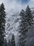 Scenic of Snow-Covered Mountains and Fir Trees