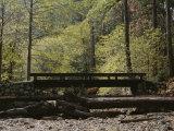 Footbridge over a Dry Stream in Yosemite