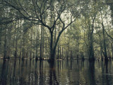 Trees Stick out of the Water