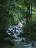 A View of a Tropical Stream in El Yunque  Puerto Rico