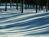 Winter Woodland View of a Lodgepole Pine Forest in Wyoming
