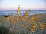 Plage avec avoine de mer en gros plan Papier Photo par Steve Winter