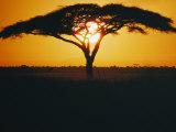Sunset and Trees  Serengeti Plains  Tanzania