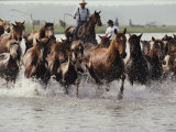 Chincoteague Cowboys Drive Their Wild Ponies to Auction