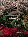 Japanese Tea Garden  San Francisco  California  USA