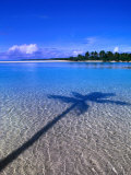 Shadow of Palm Tree on Lagoon  Cook Islands