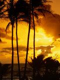 Palm Trees Silhouetted at Sunrise  Kauai  Hawaii  USA