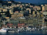City Above Port and Marina  Genova  Liguria  Italy