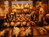 Rows of Giant Tuna for Sale at Tsukiji Central Fish Market  Tokyo  Japan