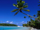 Palm Trees on Beach  Cook Islands