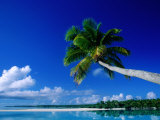 Palm Tree Over Aitutaki Beach and Lagoon  Aitutaki  Southern Group  Cook Islands