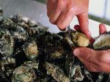 Shucking Oysters  Coffin Bay  Australia