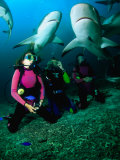 Kneeling in the Coral Rubble as Caribbean Reef Sharks Swim along the Tongue of the Ocean  Bahamas