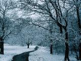 Hampstead Heath in Winter  London  England