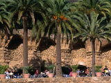 Outdoor Cafe Beneath Palm Trees in Parc Guell  Barcelona  Spain
