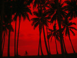 Cyclist and Palm Trees Silhouetted Against Red Sky at Sunset in Midigama  Southern  Sri Lanka