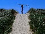 Surfer Carrying Board on Dunes at Long Point  Martha's Vineyard  Massachusetts  USA