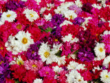 Flowers in the Devarajah Market  Mysore  Karnataka  India