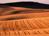 Harvested Wheat Fields  Palouse Region  Palouse  USA