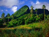 Palm Trees and Dense Jungle Peaks  Rarotonga  Southern Group  Cook Islands