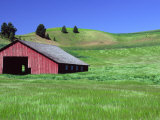Barn in Field of Wheat  Palouse Area  Washington  USA