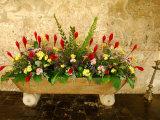 Flowers in Former Colonial Convent  Casa Santo Domingo Hotel  Antigua  Guatemala