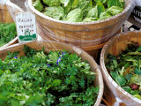 Herbs and Greens  Ferry Building Farmer's Market  San Francisco  California  USA