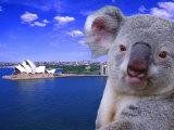 Portrayal of Opera House and Koala  Sydney  Australia